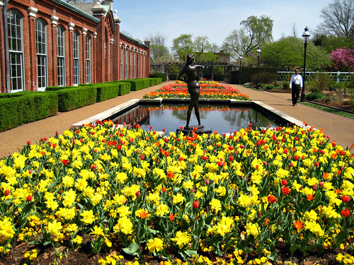 Tulips Photo Credit: Missouri Botanical Gardens