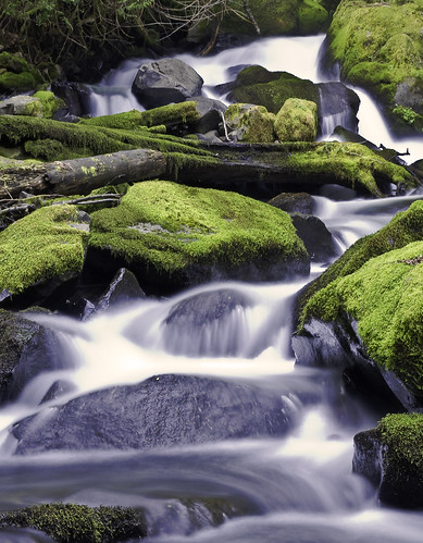 trees water creek forest canon eos 50mm waterfall moss rocks stream logs rapids 7d f18 niftyfifty