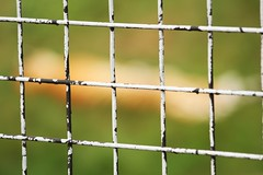 wire fencing, home fencing, fence, line, green,