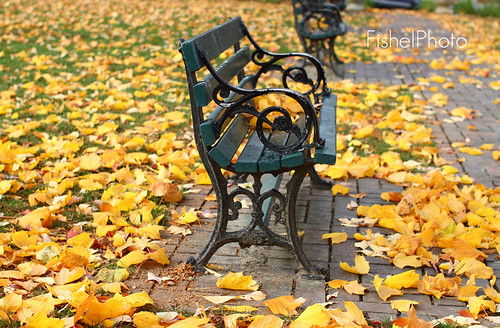 Peaceful Park Bench on a Fall Walk