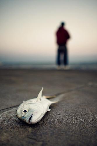 sunset fish pez mexico atardecer muelle dock veracruz