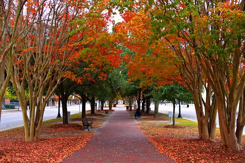 street trees red orange tree green fall leaves yellow bench leaf downtown whisper falling sidewalk hues crepe myrtle colored whispers hue crepemyrtle autums 6954d