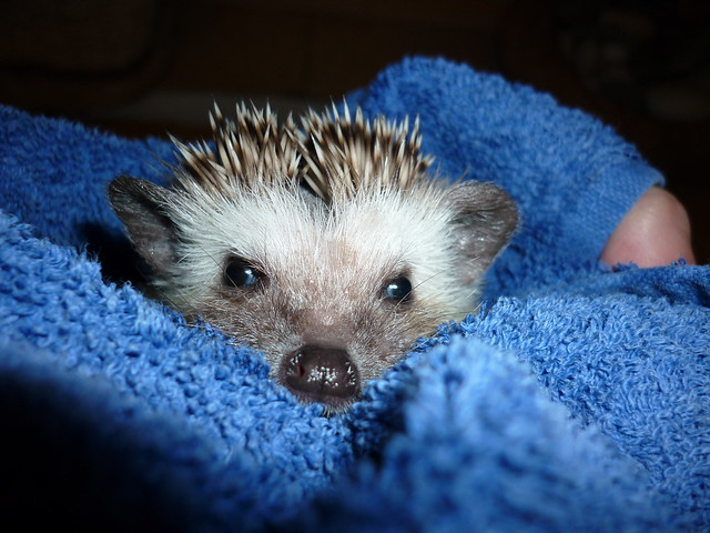 Un-Impressed by Bathing