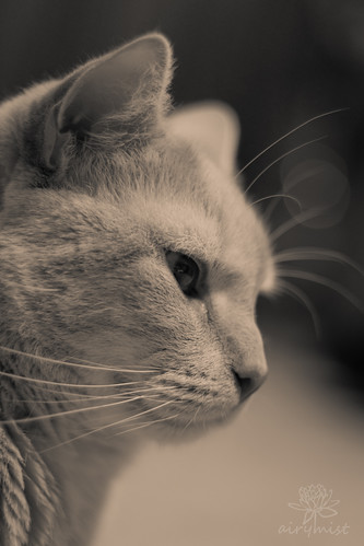 Pensive in Sepia