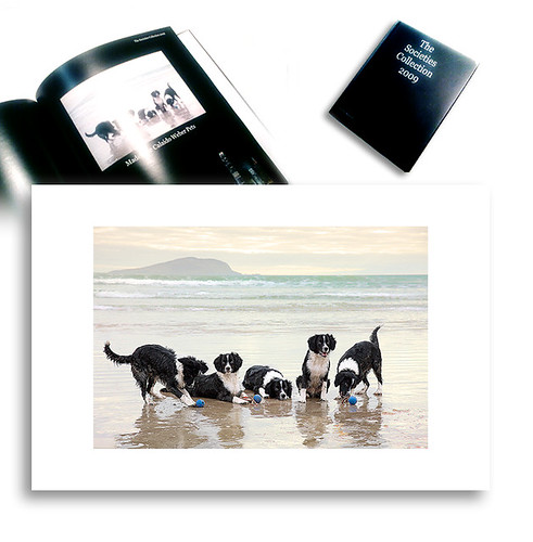 • Year Book SWPP / Category Pet Photography