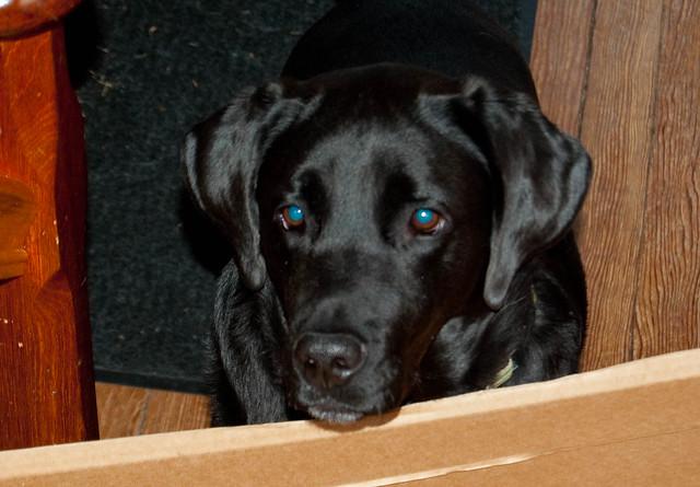 Header of Baxter