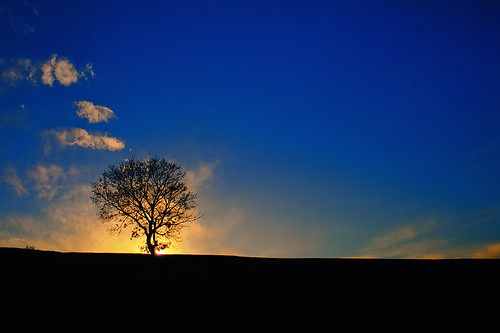 Lonely tree [explored] - 無料写真検索fotoq