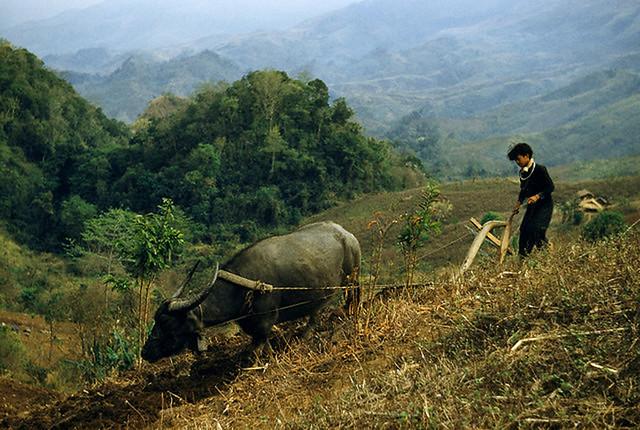 Vietnam 1952 - Vùng Tây Bắc