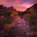Zion National Park_The Watchman by kevin mcneal