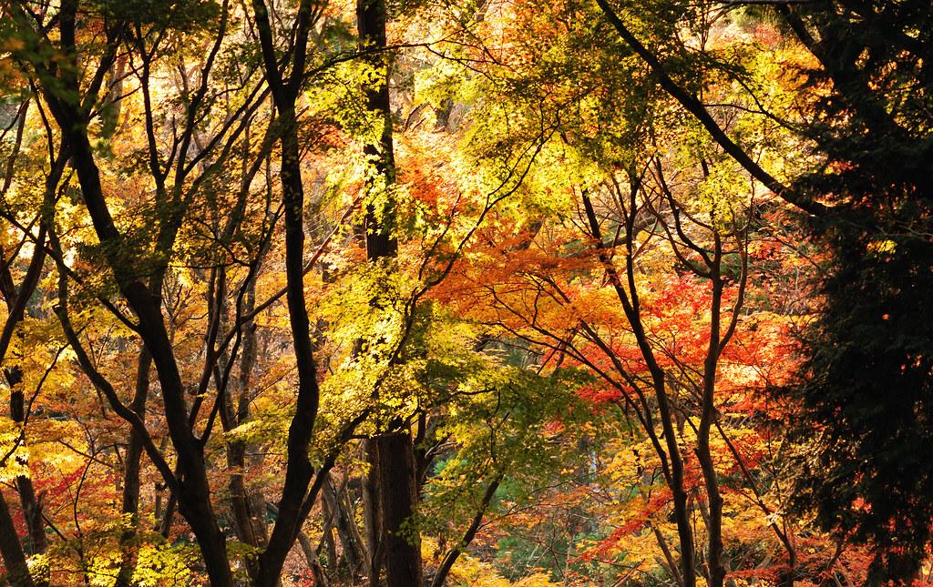Meiji Memorial Forest Takao Quasi-National Park_05