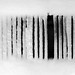 I see Barcodes Everywhere!