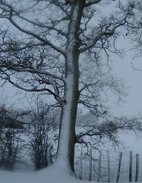 DSCN0001_04 Snow highlights a tree