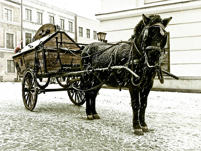 A winter horse