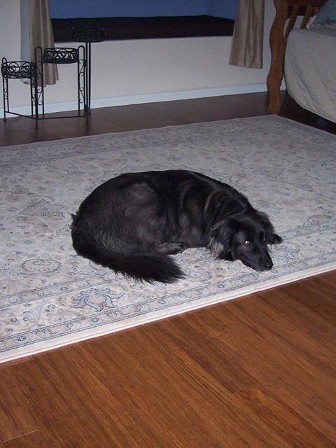 black dog bamboo floor