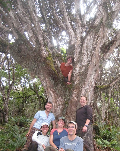 The banders with an ancient ohia