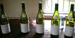wine(0.0), drinkware(0.0), glass bottle(1.0), bottle(1.0), white wine(1.0), drink(1.0), wine bottle(1.0), alcoholic beverage(1.0),