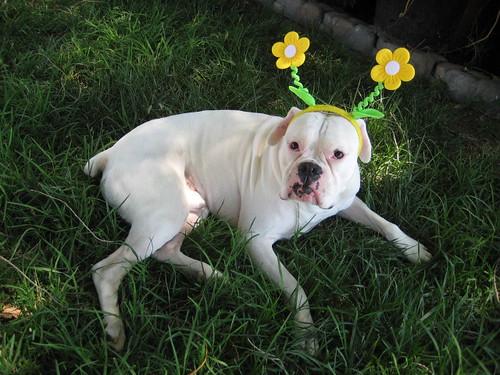 Springtime Cutie