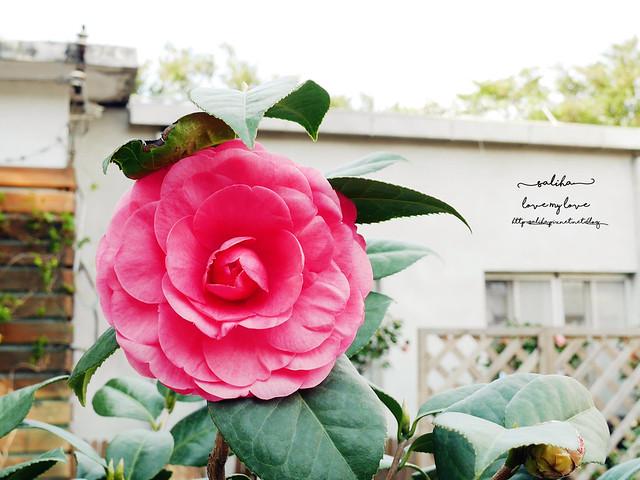 陽明山一日遊免門票景點花卉試驗中心 (19)