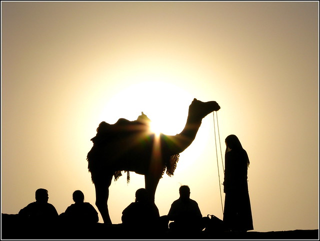 Camel safari by flickr user manojvasanth