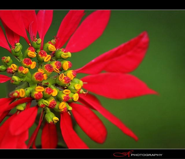 Red ..like Christmas