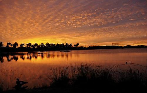 world morning trees sunset sky orange sun lake black water colors silhouette clouds sunrise reflections pond nikon skies florida south horizon ducks reflected fl dania hollywoodflorida orangeclouds sooc d5000