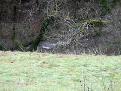 Afon Bowi in Spate 1319 160110