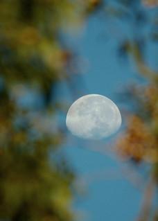 2010-04-03 05-59-45 Waning Moon viewed through gum tree - IMG_3035