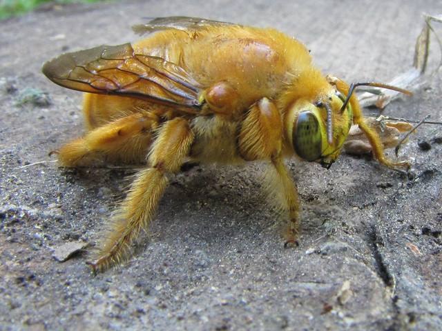 What does honey look like 10