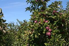 20091012 - Tougas Farm Apple Picking