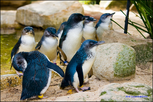 geotagged penguin fairy geo:lat=33765377 geo:lon=150882411