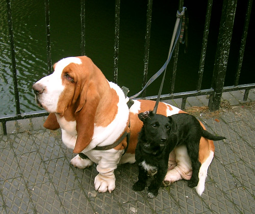 2 dogs in Candem Town