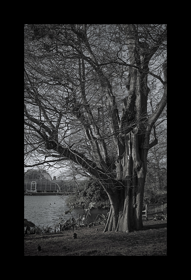 Photography: Taxodium Distichum by Nicholas M Vivian
