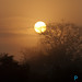 DSC_0055   Bushveld sunset Ulusaba Reserve Sabi Sands