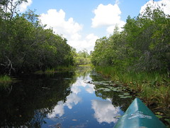 Kayaking Through Okefenokee Swamp