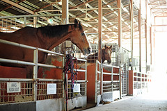 stall(1.0), horse(1.0), stable(1.0),