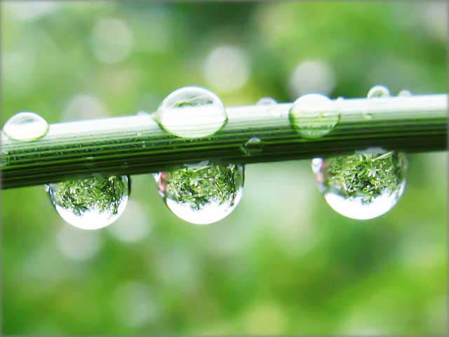 Raindrops with the Refraction of a Green Jungle - Nature in my Garden