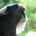 monkey bokeh by ducktourer