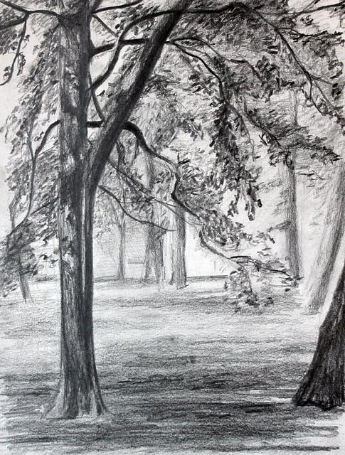 Dessin d 39 arbres du jardin du luxembourg au crayon flickr for Arbres jardin du luxembourg