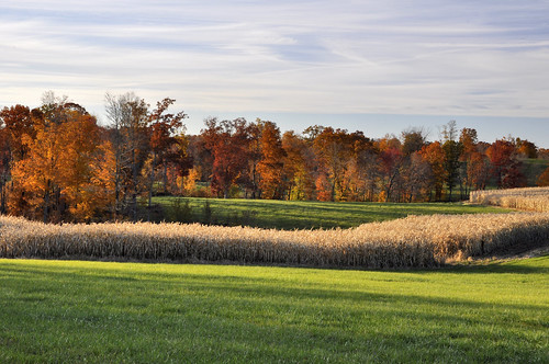 autumn trees red orange fall leaves corn fields