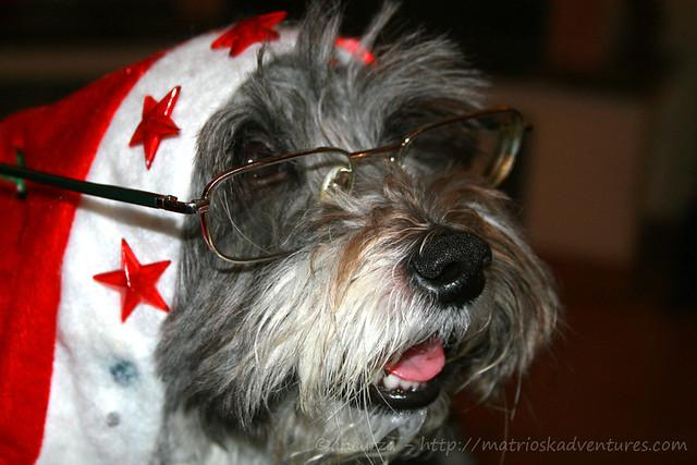 foto cane buffo con occhiali