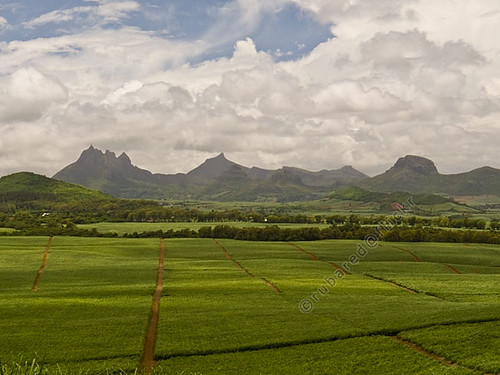 mountain landscape mus fields antoinette mauritius viewpoint sugarcane mu08 mountpiton rivièredurempart
