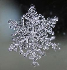 Snowflake Beauty