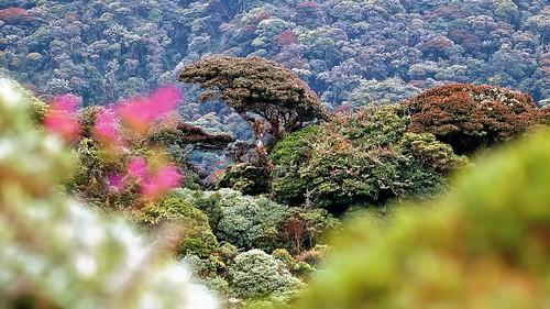 naturaleza mountain forest landscape colombia wildlife conservation viajes andes cloudforest fredy cauca biodiversidad gómez bosquedeniebla travelnature conservación megadiversidad fredygómez aperture3 pnndoñajuanacascabel fredygómezfotografía