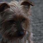 dog1-flickr