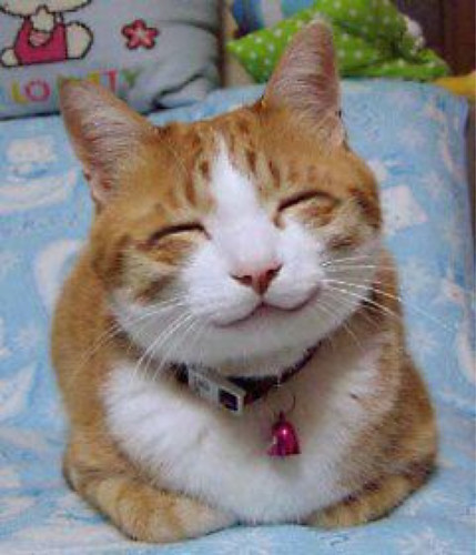 The super kawaii japanese smile cat