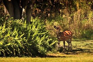 Botswana Okavango Delta _D7C15513