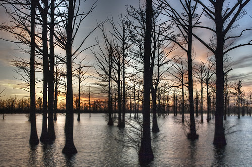 sunset water beauty rural landscape dusk mo missouri swamp cypress 2009 semo goldmedalwinner goldstaraward yourwonderland 2009lhb