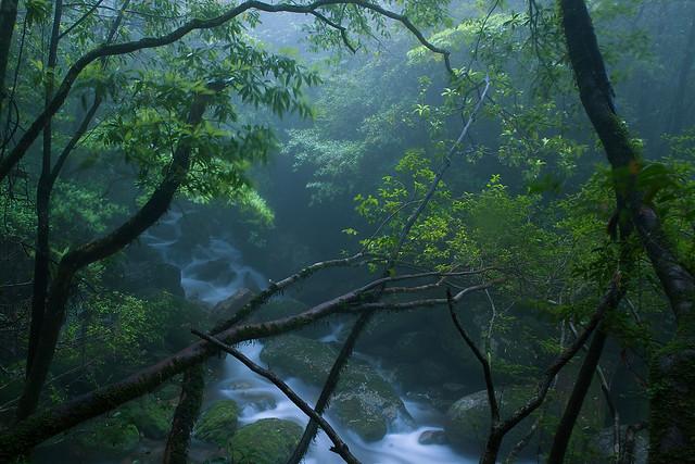 El bosque encantado de la isla de Yakushima, japon