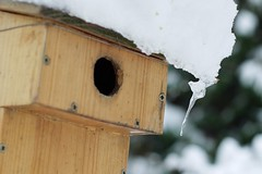 animal(0.0), wing(0.0), bird feeder(0.0), bluebird(0.0), old world flycatcher(0.0), bird(0.0), birdhouse(1.0),