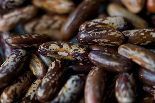 """Maxibelle"" Heirloom Beans Dried by Chiot's Run"